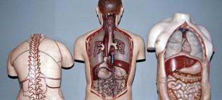 Mikrobiologie - Mensch ist gar nicht nur Mensch