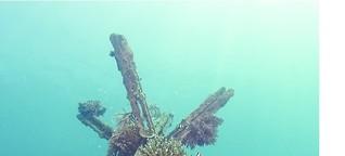 Korallen unter Strom