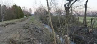 Zwist um Kahlschlag am Petersbach-Ufer