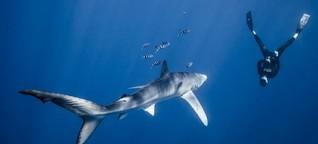 Nahaufnahme: Allein unter Haien - Lukas und die Meeresräuber