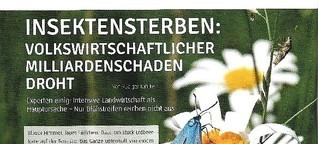 Insektensterben: Alarmierende Beobachtungen