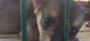 Hilfe für Straßenhunde: So vermittelt das größte Tierheim der Welt Streuner nach Deutschland