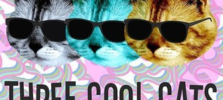 Three Cool Cats Festival