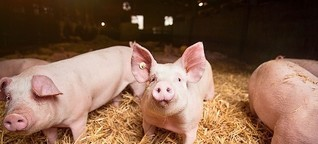 Wertschätze Schweine und Kaninchen