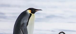 Unverfrorene Freunde -- mein Leben unter Pinguinen