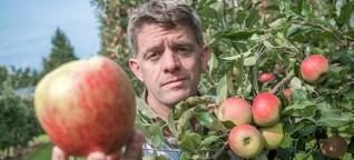 Diese großen, saftigen Äpfel aus der Region sind Ladenhüter