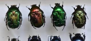 Ein Käfer wie ein Edelstein