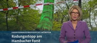 Rodungsstopp am Hambacher Forst