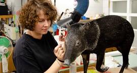 """Tierpräparatorin: """"Oft sagt jemand: 'Ist das nicht eklig?'"""""""