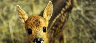US-Wilderer muss in Haft Bambi schauen