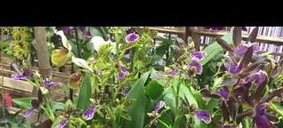 Orchideen im g&v CreativCenter auf der IPM 2019