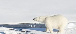 Raus aus der Filterblase | Klimawandel - Kapitalismus als Klimaretter? | detektor.fm | 11.02.2019