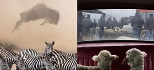 Das sind die 10 besten Bilder des Naturfoto-Wettbewerbs #natgeo100contest