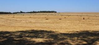 Windenergie in Chile: Indigene Mapuche bleiben außen vor
