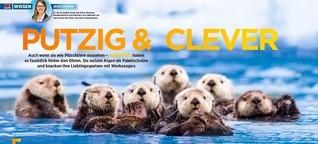 TV DIREKT: Putzig & Clever