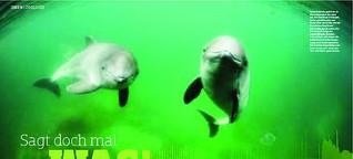 Sag doch mal was -- der mit den Schweinswalen spricht