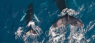 """Alex Cornelissen, Sea Shepherd: """"Es ist wirklich ein Kampf ums Überleben"""""""