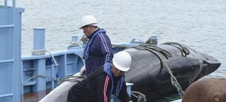 """Walfang: """"Die gute Nachricht ist, dass die Nachfrage überall sinkt"""""""
