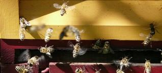 """""""Wir brauchen nicht noch mehr Bienenvölker"""""""