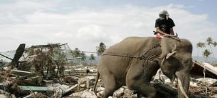 Naturkatastrophen: Rennen, wenn die Elefanten rennen?
