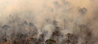 Bolsonaro führt Krieg gegen den Amazonas