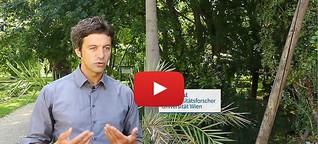 Palmen in Österreich als Folge des Klimawandels