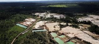 Regenwald: Drei Fußballfelder pro Minute