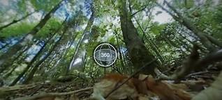 Wandern im Schwarzwald – 360-Grad-Aufnahme