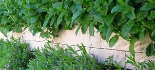 Mit Pflanzen zu einem besseren Stadtklima