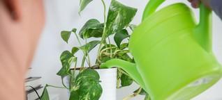 Studie: Keine bessere Luft durch Pflanzen