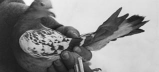 Der Taubengeheimdienst