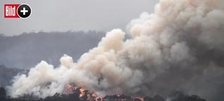 Feuer-Hölle Australien: Kann der Qualm auch zu uns kommen?