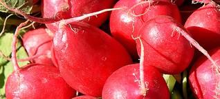 Balkongarten: Welches Gemüse wir ab Mitte August noch ziehen können