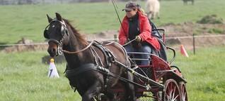 Fahrergemeinschaft Schleswig-Holstein/Hamburg: Saisonabschluss von 32 Pferdegespannen
