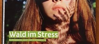 Wald im Stress
