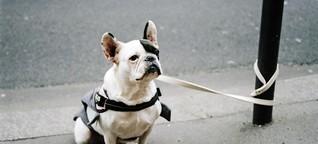 Hundevermittlung durch Hotels - Gefährten für den Tag oder fürs Leben