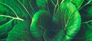 Darum nutzen auch Biobauern Pestizide