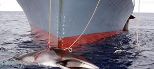 Greenpeace-Experte: Kritik an japanischer Walfang-Expedition