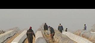 Corona-Krise: Landwirtschaft in Not | Markt | NDR