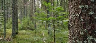 Wie klingt ein guter Wald? - Servus TV