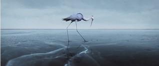☛ Sous la Glace – Unter dem Eis | Trickfilm Tiere Natur