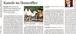 Kamele im Homeoffice