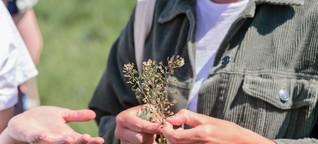 Wildkräuter & Wildpflanzen: Tipps für's Sammeln und Trocknen