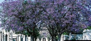 Als die Sehnsucht sich in Lissabon breitmachte