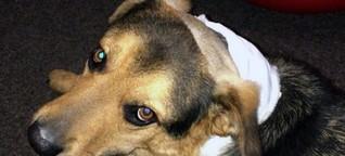 Niemand will Balou adoptieren - Hund aus Wiesbaden hat bewegende Geschichte