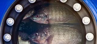Tierfutter - Proteinquell für die Aquakultur
