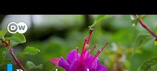 Flores para el alma y para el alimento