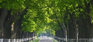 Alleen: Naturschutz gegen Verkehrssicherheit