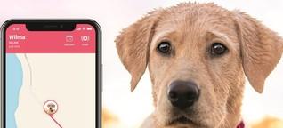Auch Hund und Katze können vernetzt sein