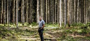 Bayern: Private Waldbesitzer machen hohe Verluste